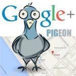 الگوریتم کبوتر گوگل چیست و چه تاثیری بر رتبه سایت دارد؟